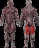 Сгибание ног лежа  CT 2021 - фото 2
