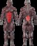 Пресс / Разгибатель спины  CT 2018 - фото 2