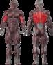 Вертикальная тяга  CT 2020 - фото 2